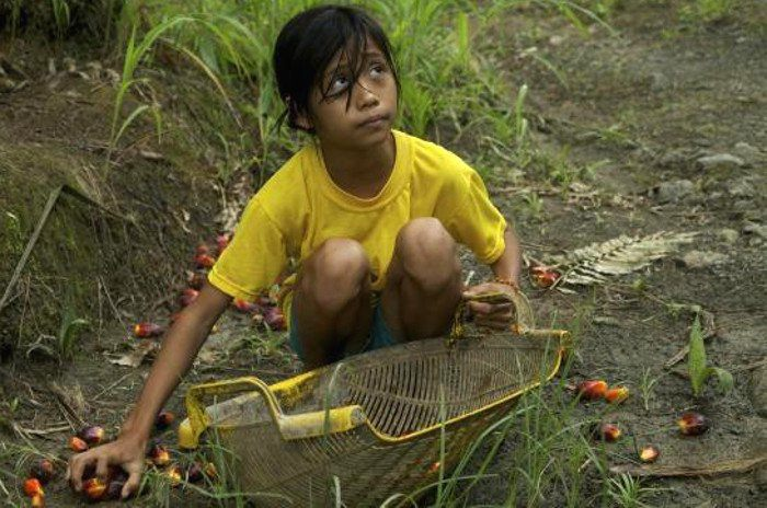 First Peoples Worldwide, http://firstpeoples.org/wp/report-indonesian-palm-oil-industry-rife-with-human-rights-abuses/