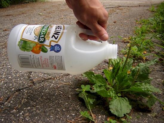 EMGN, http://emgn.com/entertainment/10-weeding-hacks-will-change-gardens-life-forever/