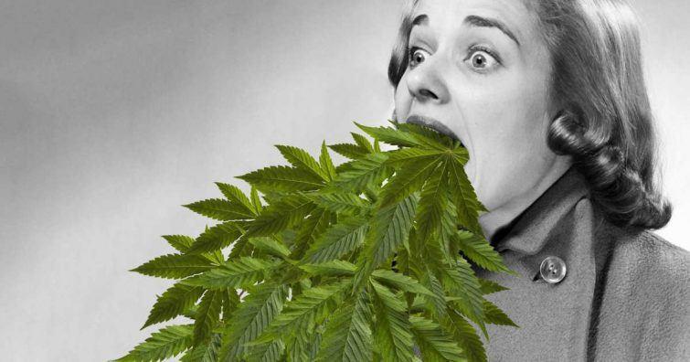 14-marijuana-allergy-cannabinoid-hyperemesis-what-its-like.w600.h315.2x