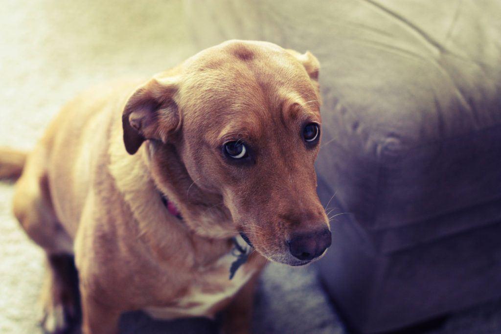 Rappi, http://blog.rappi.com/2016/10/12/tips-para-entrenar-tu-perro/