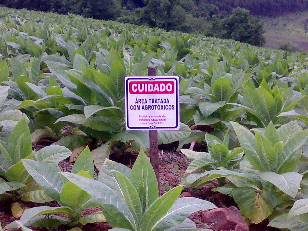 Página 13, http://www.pagina13.org.br/campanhas/dia-internacional-de-mobilizacao-contra-os-agrotoxicos/