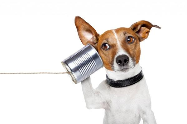 Dog Training Basics, http://www.dogtrainingbasics.com/why-wont-dog-listen-to-me/