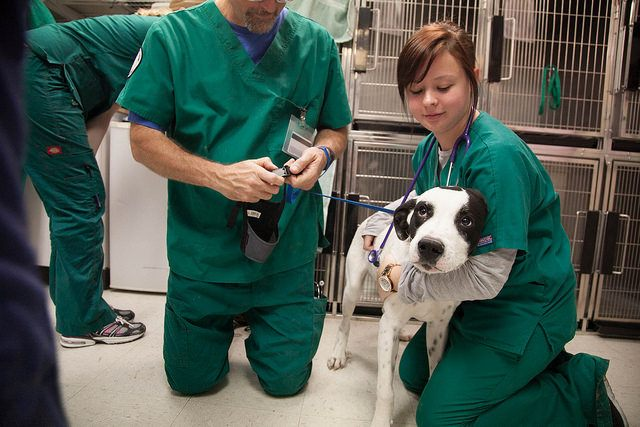 Petmd, http://www.petmd.com/news/health-science/marijuana-dangerous-dogs-detroit-couple-finds-out-after-dog-poisoned-32952