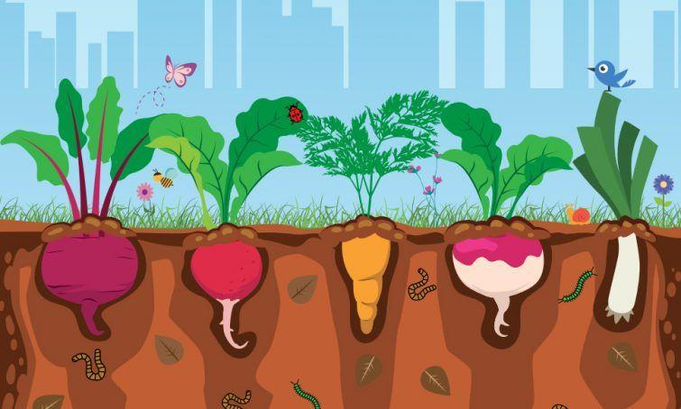 horta-plantar-urbana-alimento-cartilha-sossolteiros