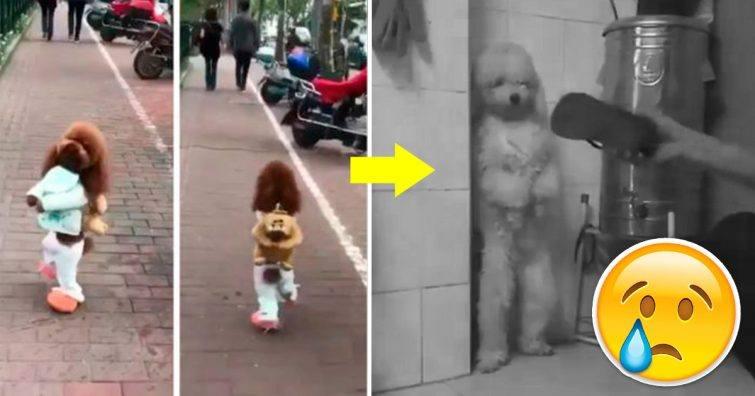 cachorrinho anda com as duas patas feito gente