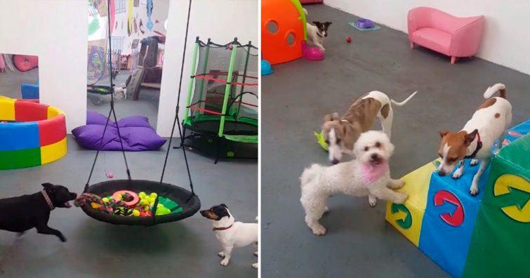 centro recreacao cachorros
