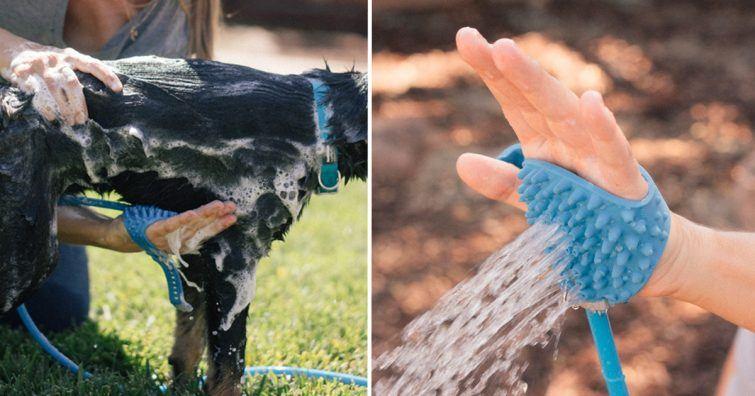 limpeza cachorro carinho