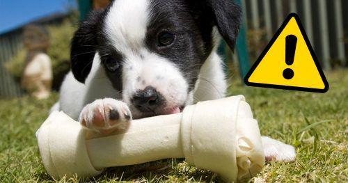 01b7ffae7e Ossos de couro são um perigo para os cachorros  entenda o motivo
