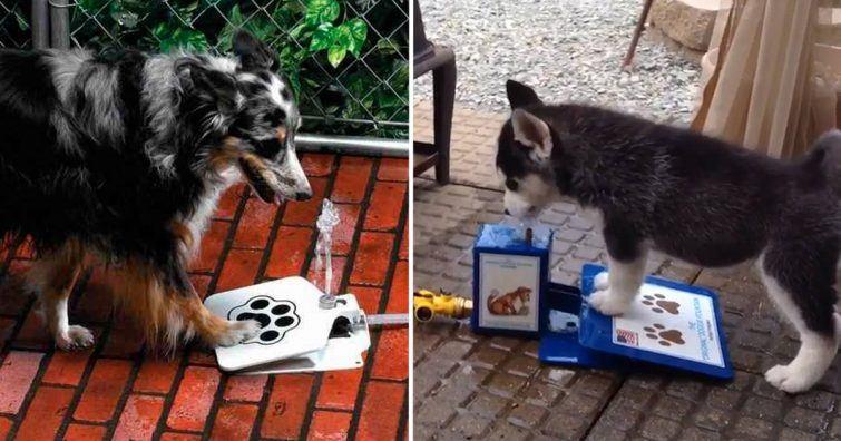 fonte para cachorros bebedouro canino