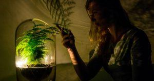 luz acende energia planta fotossintese