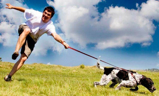 cachorro aumenta vida solteiros saude