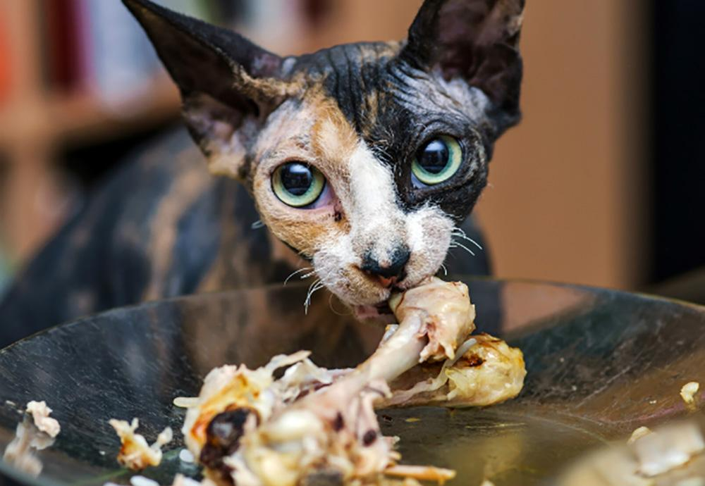 Catster, http://www.catster.com/lifestyle/cat-health-tips-what-human-food-can-cats-eat