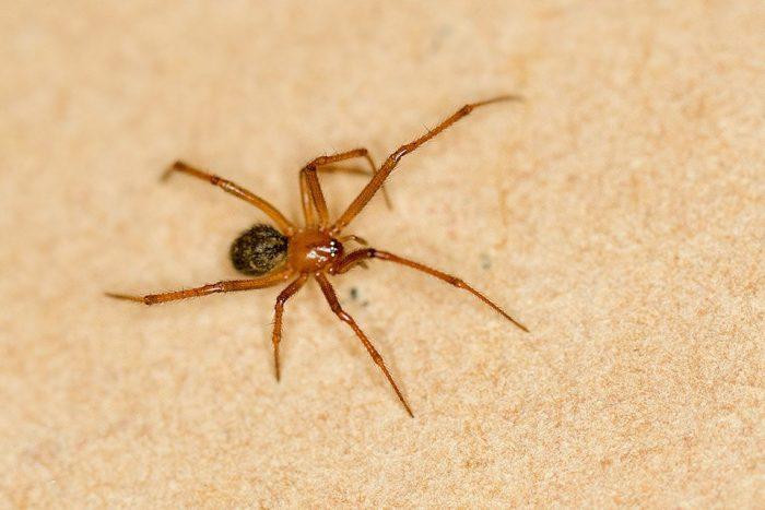 Cultura Mix, http://animais.culturamix.com/informacoes/insetos-e-aranhas/aranhas-domesticas-inofensivas