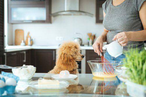 Meus Animais, https://meusanimais.com.br/por-que-nao-devemos-permitir-animais-na-cozinha/amp/