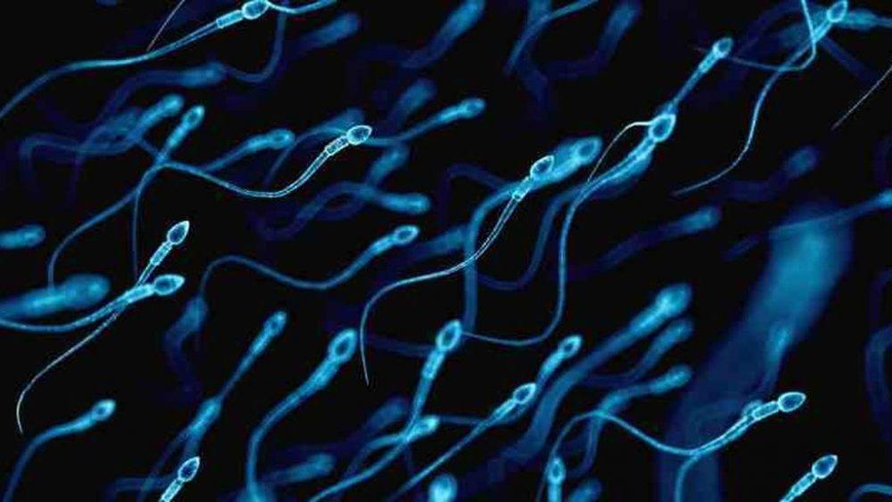 El Espanol, https://www.elespanol.com/ciencia/salud/20180611/ingrediente-secreto-espermatozoides-explicaria-infertilidad/314218961_0.html
