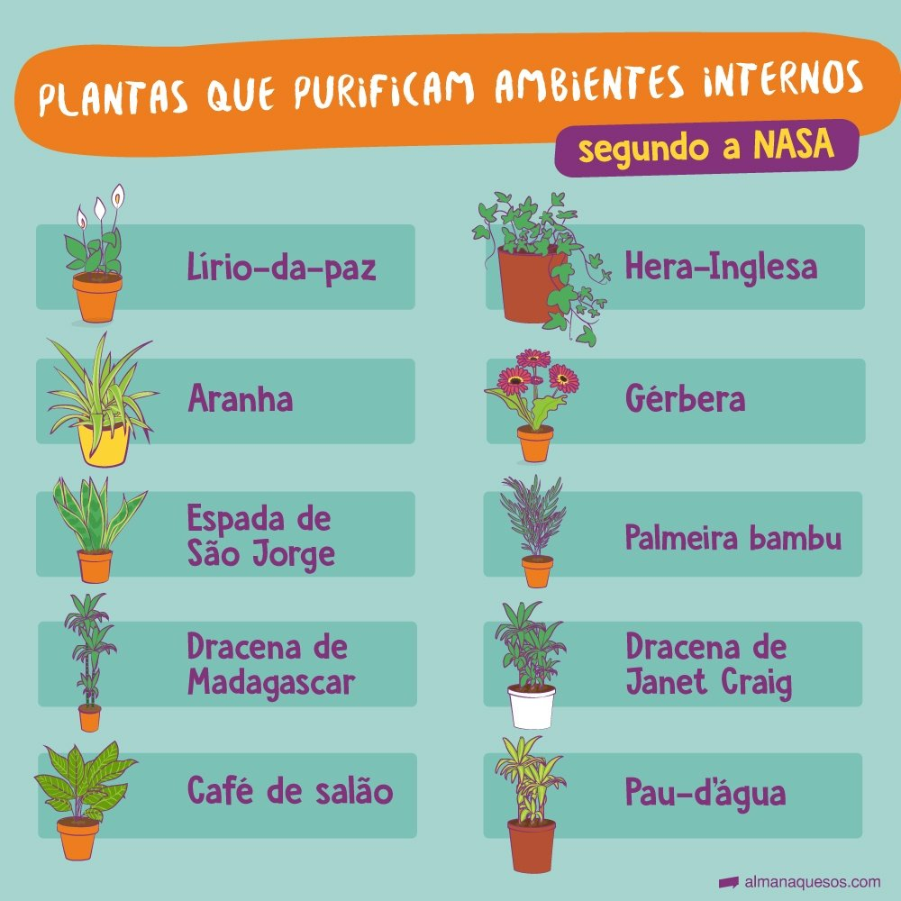 Plantas que purificam ambientes internos, segundo a NASA Lírio-da-paz Hera-Inglesa Aranha Gerbera Espada-de-São-Jorge Palmeira-bambu Dracena-de-madagascar Dracena Janet Craig Café-de-salão Pau-d'água