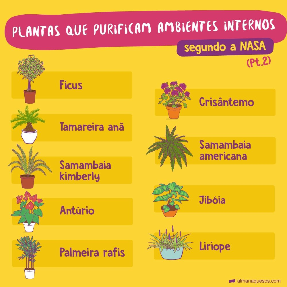 Plantas que purificam ambientes internos, segundo a NASA (parte 2) Ficus crisântemo tamareira-anã samambaia americana samambaia 'kimberly' jiboia antúrio liríope palmeira-rápis