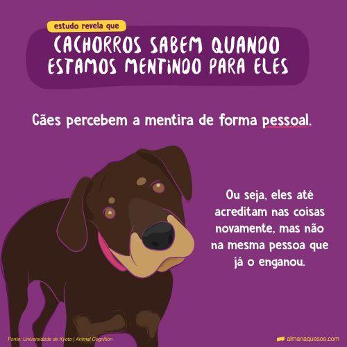 Cachorros sabem quando estamos mentindo para eles, revela estudo Cães percebem a mentira de forma pessoal. Ou seja, eles até acreditam nas coisas novamente, mas não na mesma pessoa que já o enganou. Fonte: Universidade de Kyoto | Animal Cognition