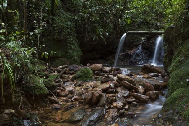 Parque Estadual Serra do Mar, http://www.parqueestadualserradomar.sp.gov.br/pesm/atividade/trilha-da-bica/