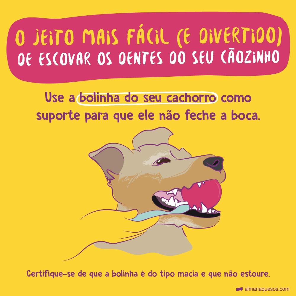 O jeito mais fácil (e divertido) de escovar os dentes do seu Cãozinho Use a bolinha do seu cachorro como suporte para que ele não feche a boca. Certifique-se de que a bolinha é do tipo macia e não estoura.