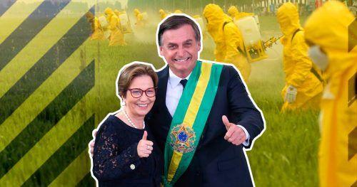Resultado de imagem para 2019, o ano mais tóxico do Brasil