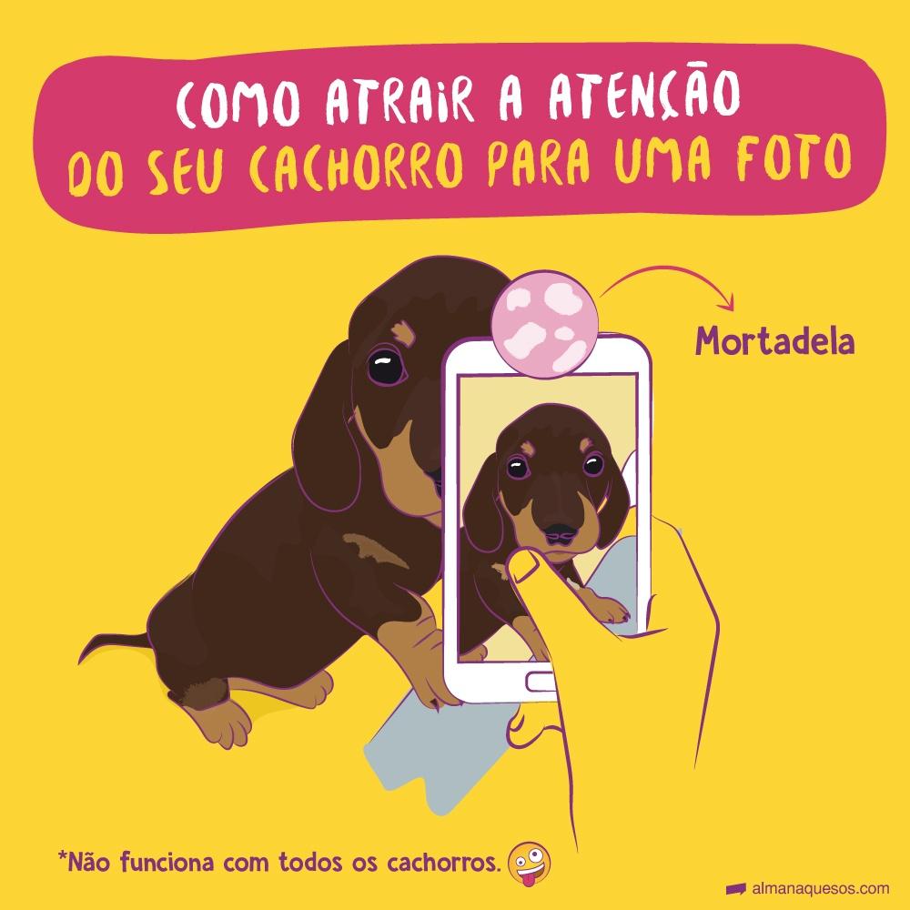 Como atrair a atenção do seu cachorro para uma foto mortadela *não funciona com todos os cachorros