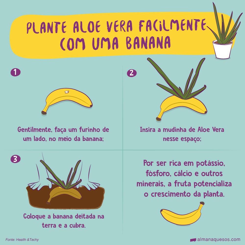 Plante Aloe Vera facilmente com uma Banana 1. Gentilmente, faça um furinho de um lado, no meio da banana. 2. Insira a mudinha de Aloe Vera nesse espaço. 3. Coloque a banana deitada na terra e a cubra. Por ser rica em potássio, fósforo, cálcio e outros minerais, a fruta potencializa o crescimento da planta.