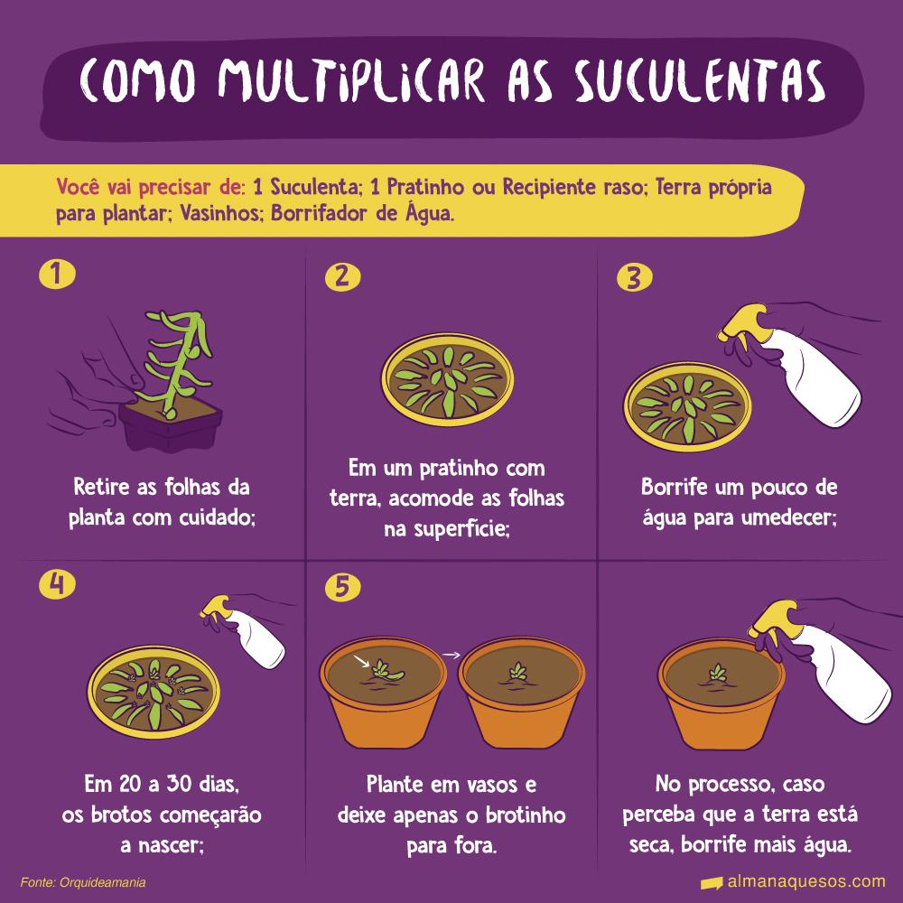 Como multiplicar as suculentas Você vai precisar de: 1 Suculenta; 1 Pratinho ou Recipiente raso; Terra própria para plantar; Vasinhos; Borrifador de Água. 1. Retire as folhas da planta com cuidado. 2. Em um pratinho com terra, acomode as folhas na superfície. 3. Borrife um pouco de água para umedecer. 4. Em 20 a 30 dias, os brotos começarão a nascer. 5. Plante em vasos e deixe apenas o brotinho para fora. ⚠️ No processo, caso perceba que a terra está seca, borrife mais água. Fonte: Orquideamania