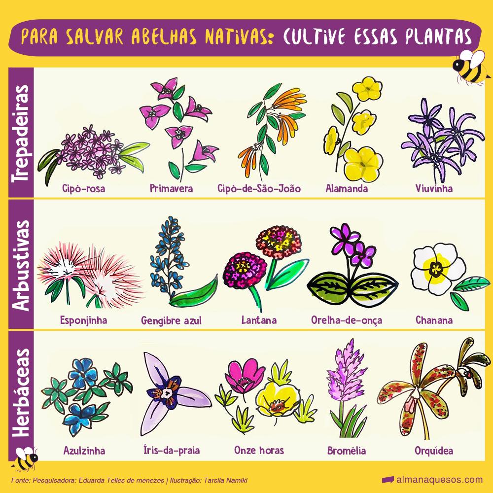 para salvar abelhas nativas, cultive essas plantas. Trepadeiras Cipó-rosa Primavera Cipó-de-São João Alamanda Viuvinha Arbustivas Esponjinha Gengibre azul Lantana Orelha-deonça Chanana Herbáceas Azulzinha ìris-dapraia Onze-horas Bromélia Orquídea