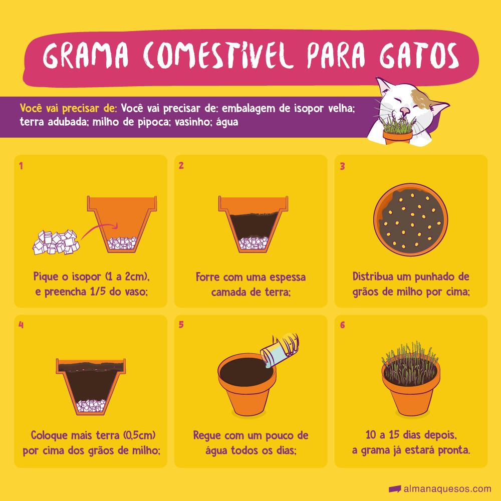 Grama comestível para gatos Você vai precisar de: embalagem de isopor velha; terra adubada; milho de pipoca; vasinho; água 1. Pique o isopor (1 a 2cm), e preencha 1/5 do vaso; 2. Forre com uma espessa camada de terra; 3. Distribua um punhado de grãos de milho por cima; 4. Coloque mais terra (0,5cm) por cima dos grãos de milho; 5. Regue com um pouco de água todos os dias; 6. 10 a 15 dias depois, a grama já estará pronta.